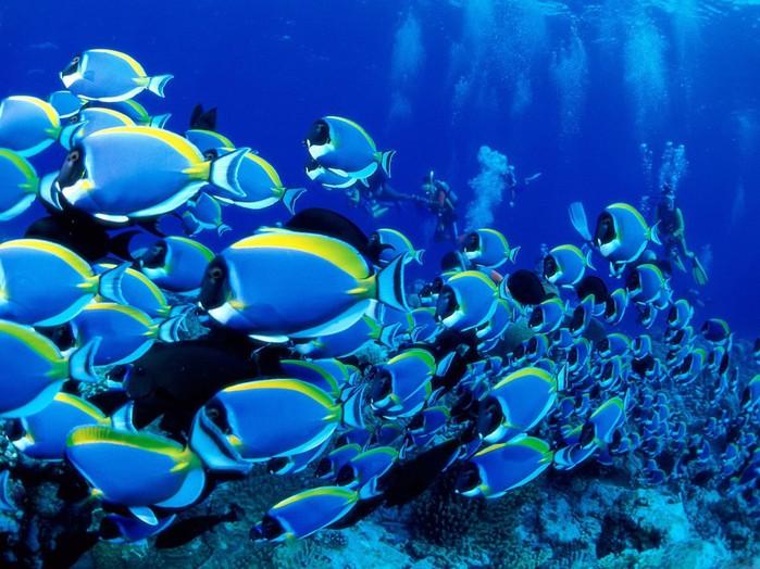 подводный мир (700x524, 120Kb)