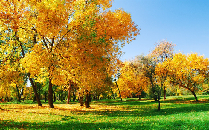 Golden-autumn_1440x900 (700x437, 250Kb)