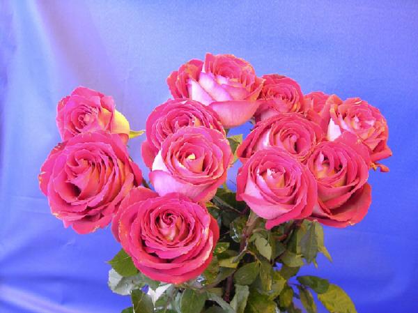 букет роз2 (600x449, 113Kb)