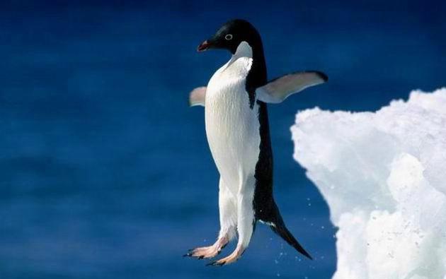 пингвин (630x395, 33Kb)