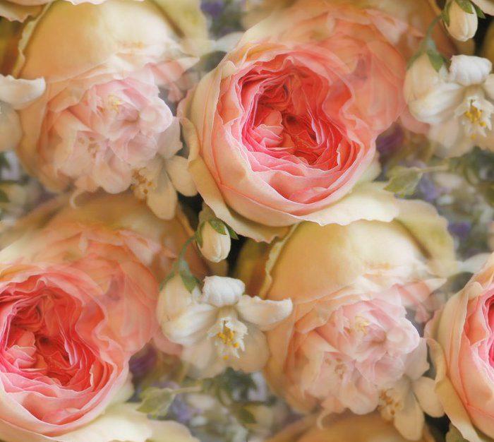 78995431_limoge_creamer_eden_roses_1 (700x626, 65Kb)