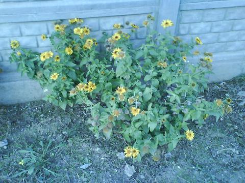цветок (480x360, 51Kb)