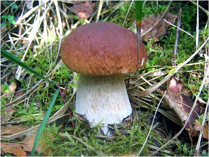 Песенка грибов