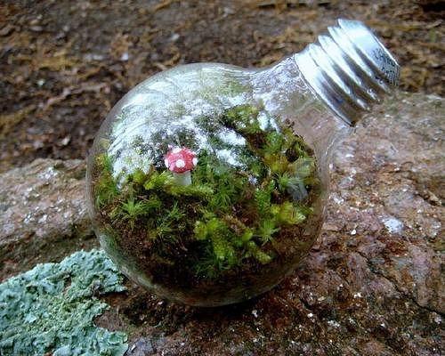 Сад в бутылке своими руками фото