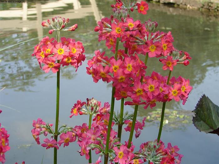 Волшебные сады Аппельтерна 26626