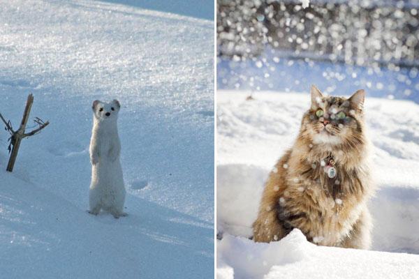 Снежные животные обсуждение на