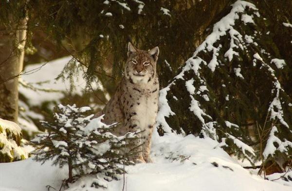 Животные зимойе