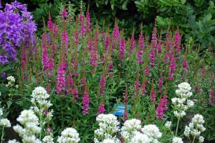 Волшебные сады Аппельтерна 98371