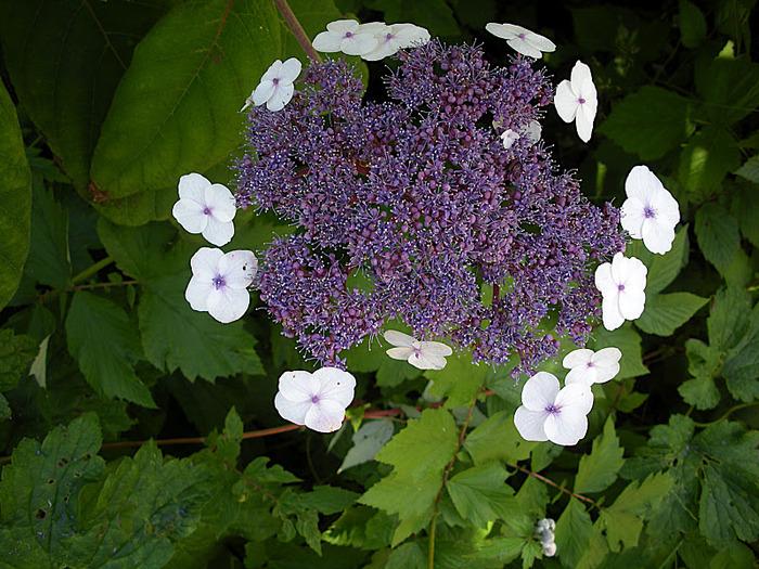 Волшебные сады Аппельтерна 58744