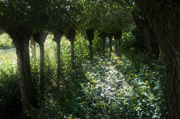 Волшебные сады Аппельтерна 43500