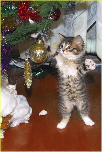 Новогодняя ёлка и котята