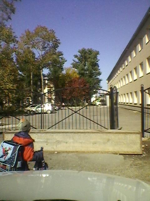 Осень. Школьники идут. Деревья стали светофором.