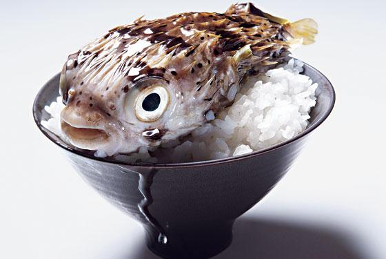 fugu (560x375, 44Kb)