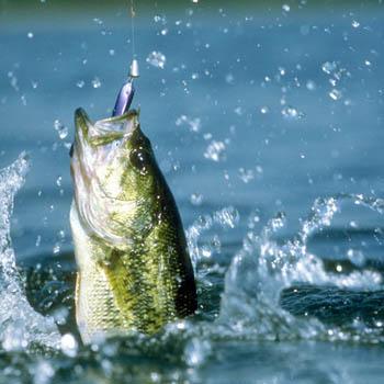 рыбалка (350x350, 47Kb)