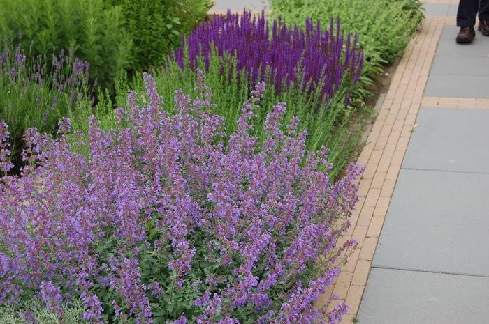 Волшебные сады Аппельтерна 28429