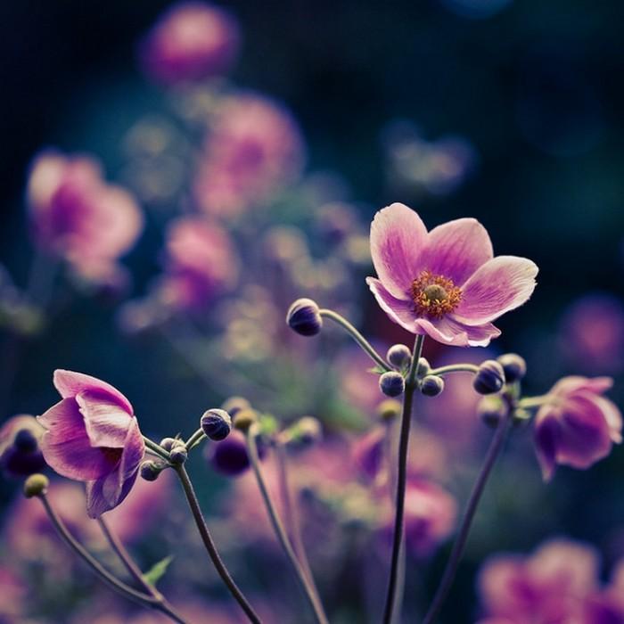 Самые красивые фотографии цветов за октябрь 2011