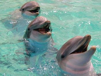 dolphin3 (350x262, 18Kb)