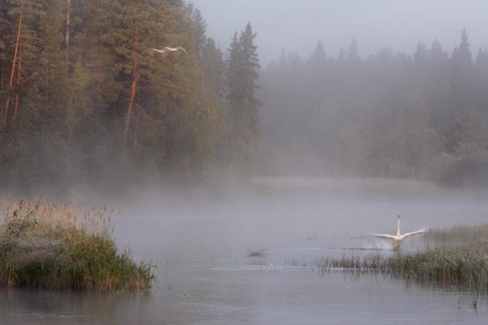 национальный парк Оуланка1 (700x466, 338Kb)