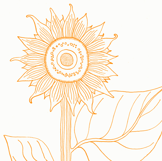 Ink sunflower (550x547, 256Kb)