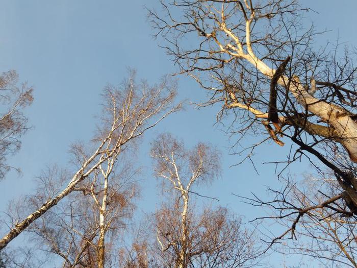 Вершины деревьев. Ближе к небесам/3241858_ (700x525, 80Kb)