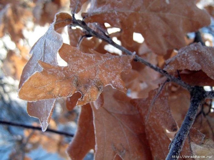 Воргольские скалы, Рябинки, заповедник Галичья гора, ноябрь 2011 (30) (700x525, 238Kb)