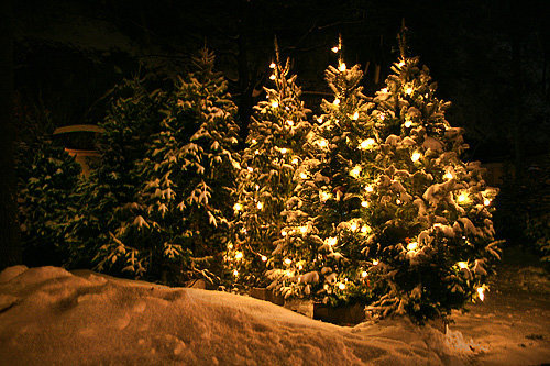 Snowy Christmas Tree Tumblr