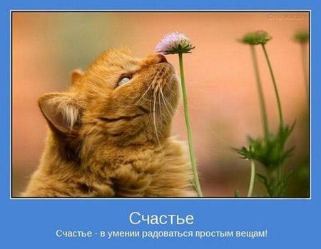 4 счастье в умении радоваться (450x349, 40Kb)
