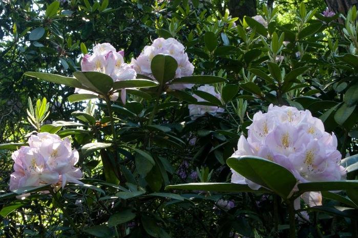 Ботанический сад в Пругонице 67445