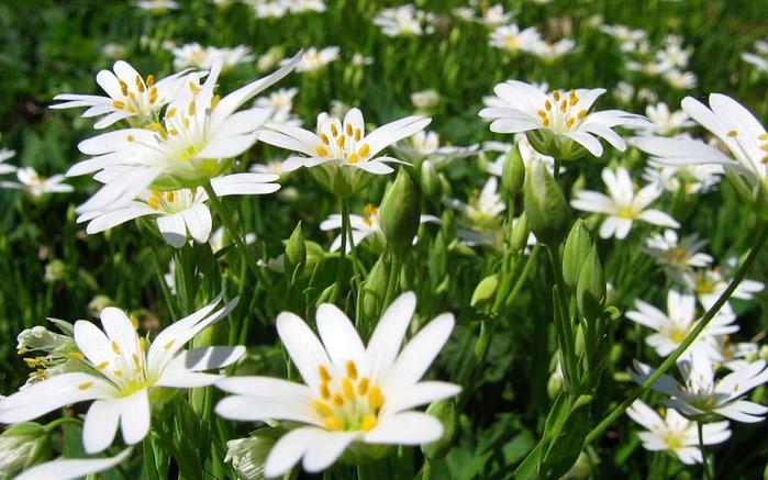 Ботанический сад в Пругонице 70029