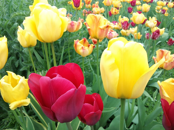 Ботанический сад в Пругонице 24289