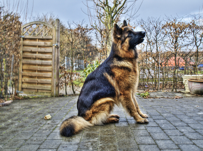 Dog (700x522, 308Kb)