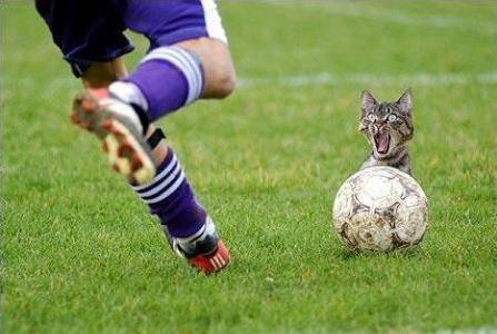 Мяч и кот (447x300, 25Kb)