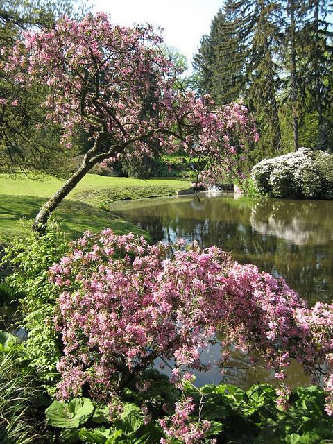 Ботанический сад в Пругонице 49879