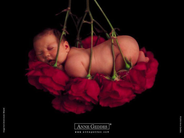 Анна Геддес. Малыши-цветы!