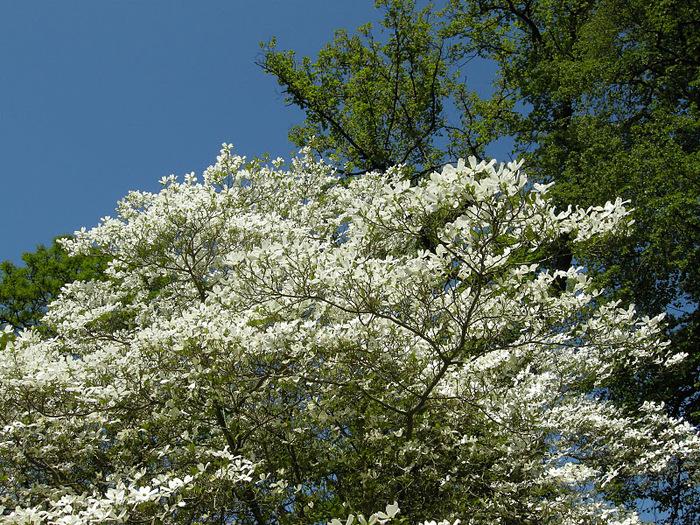 Ботанический сад в Пругонице 75975