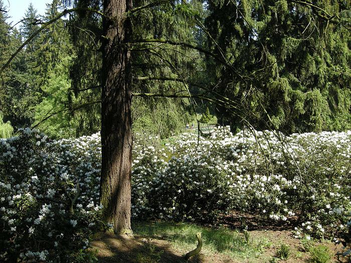 Ботанический сад в Пругонице 36703