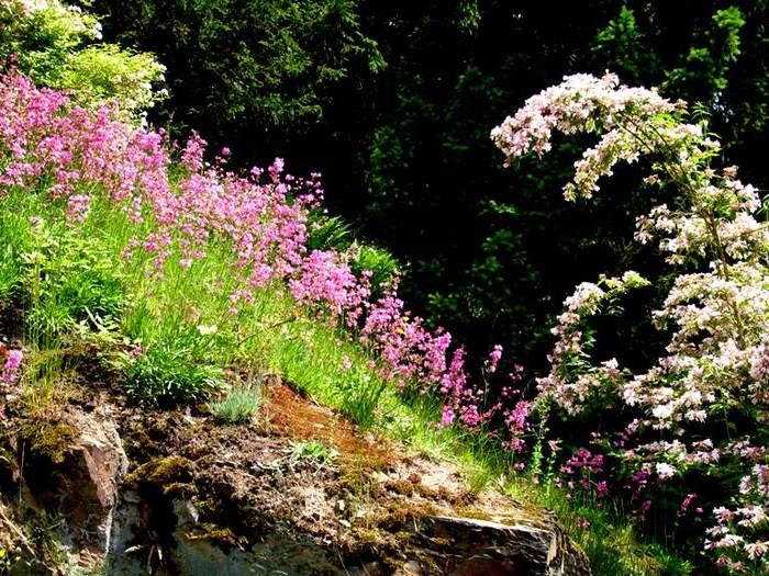 Ботанический сад в Пругонице 80654