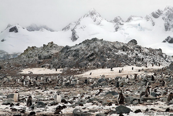 Антарктида, фото