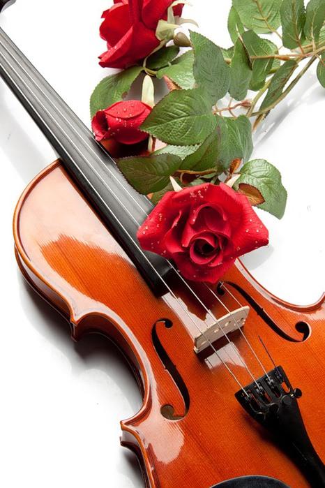 роза на скрипке (466x700, 104Kb)