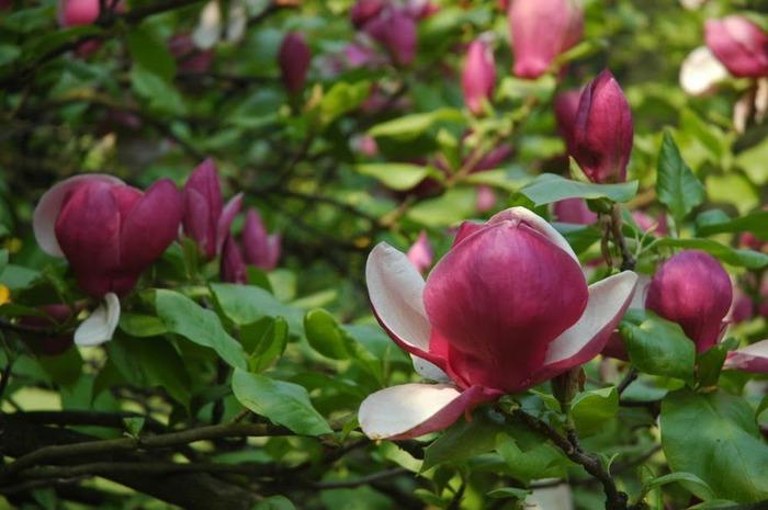 Ботанический сад в Пругонице 12440