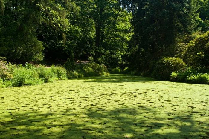 Ботанический сад в Пругонице 62273