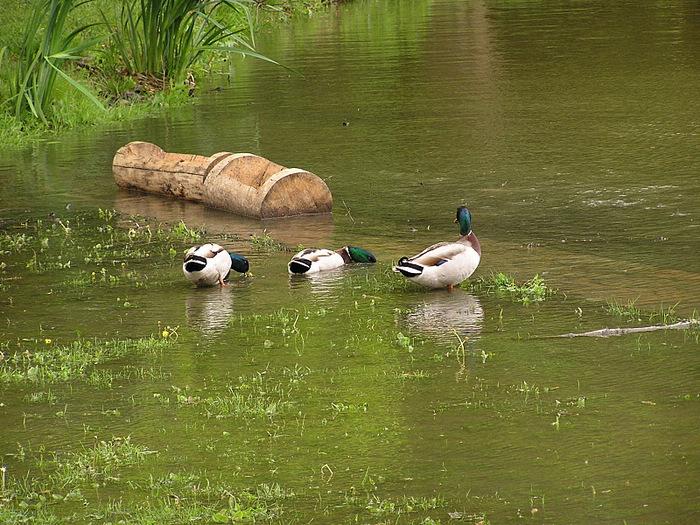 Ботанический сад в Пругонице 23770