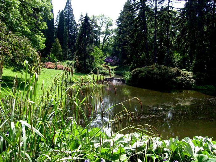 Ботанический сад в Пругонице 66584