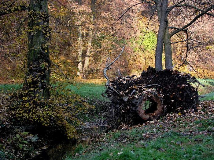 Ботанический сад в Пругонице 75897