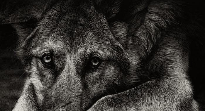 Техника граттаж, рисунки граттаж, потрясающие рисунки, Кристина Пенеску, Cristina Penescu, рисунки в технике граттаж