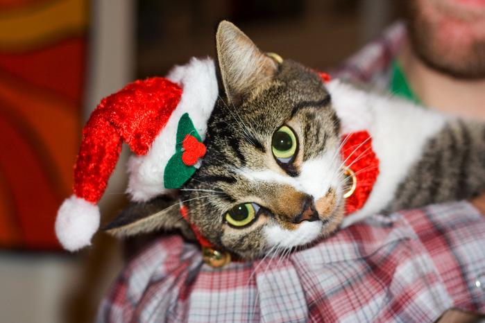 Christmas_cat (700x466, 107Kb)