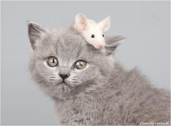 смешной котенок фото/3185107_koto (550x404, 40Kb)