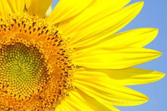 33_medova-masaz-kvetina (550x367, 40Kb)