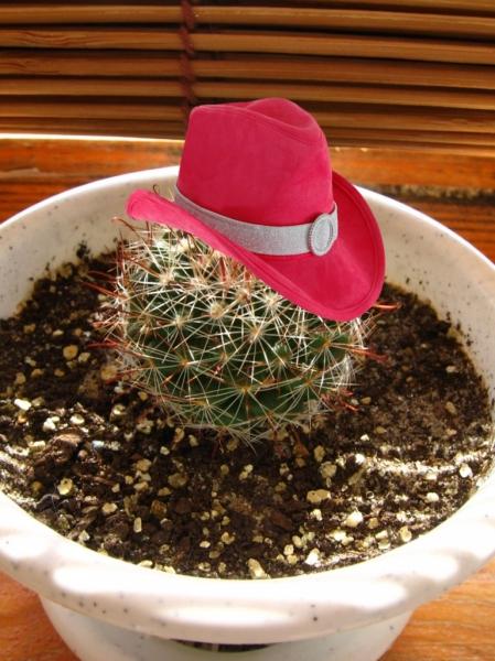 3821971_kaktus12 (449x600, 223Kb)