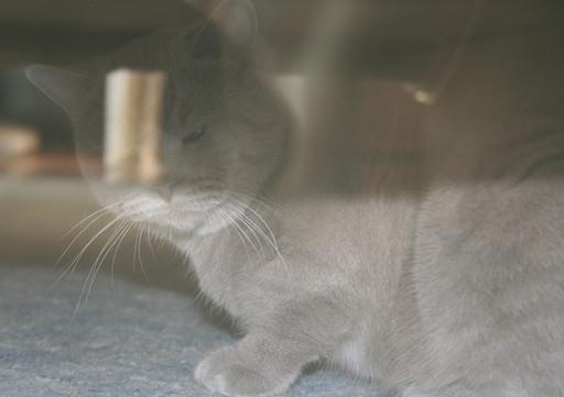 могут ли видеть коты духов профнастил Нижнем Новгороде